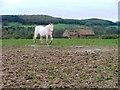 NZ5817 : Barn and Paddock, Poplar Farm by Mick Garratt