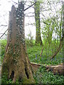 TL0439 : King's Wood near Ampthill by Paul Dixon