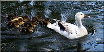 SP1106 : Wildlife on Rack Isle by Pam Brophy