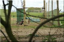 SU4626 : Pheasant Rearing, Compton End by Pierre Terre