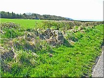 NX2159 : Field boundaries - wall and hedge by Oliver Dixon