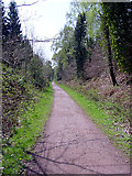 SO6210 : Cycle Path, Forest of Dean by Linda Bailey