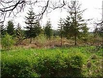 NT0561 : Woodland, Over Williamson. by Richard Webb