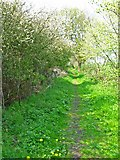NZ3319 : Bridleway at Petty's Nook by Oliver Dixon