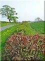 NZ3525 : Hedgerow near West House Farm, Foxton by Oliver Dixon
