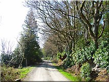 NX2355 : Driveway on north side of Whitefield Loch by Oliver Dixon