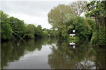 ST7264 : River Avon above Weston Cut, Locksbridge, Bath by Pierre Terre