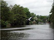 ST6968 : River Avon above Swineford Lock by Pierre Terre