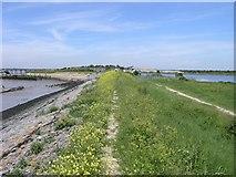 TQ7076 : Saxon Shore Way near Cliffe Fort by Hywel Williams