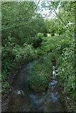 TQ0339 : Small river that runs through Rye farm by Andrya Prescott