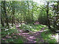 TQ4033 : Footpath Junction in the woods by N Chadwick