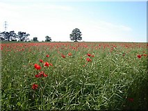 SP6134 : Poppy Field, near Mixbury by Janine Forbes