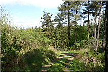 NT0032 : Track in the Woods by Adrian and Janet Quantock