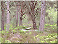NH9022 : The Red Squirrel Trail by Gary Rogers