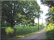 SJ5444 : South Cheshire Way, by Wirswall by Espresso Addict