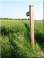 TL9443 : Footpath near Edwardstone by Oliver Dixon