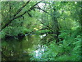 SX6974 : Pool above weir on West Webburn River by Derek Harper