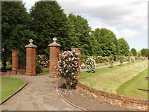TL9925 : Rose garden by Colchester Castle by David Hawgood