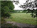 SW6334 : Looking towards Clowance woods by Sheila Russell