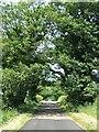 NU2213 : Tree Canopy by Christine Westerback