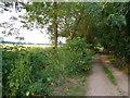 ST3223 : Sedgemoor Drove by Derek Harper