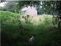 SM9533 : Llanstinan Church,  North Pembrokeshire by ceridwen
