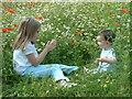SJ5173 : Wheeldon Copse Wildflower Meadow by Neil Kennedy