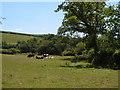 SX8150 : Meadow by Collaford Bridge by Derek Harper