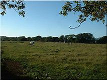 SH3233 : Farmland near Wern Fawr by David Medcalf