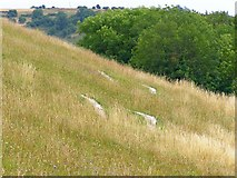 ST6601 : Giant feet on Giant Hill, Cerne Abbas by Jim Champion