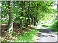 NY7788 : Light and shade, Sidwood, Kielder Forest by Oliver Dixon