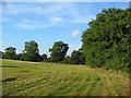 SJ5840 : Traditional hay meadow, Melverley Farm by Espresso Addict