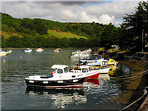 SX2553 : East Bank of the Looe River: Cornwall by Pam Brophy