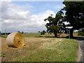 TM3998 : Near High House Farm by Linda Bailey