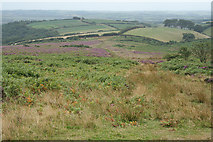 SS8229 : Molland: above Anstey's Combe by Martin Bodman