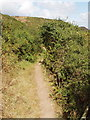 SW8571 : Path to Porth Mear, with blackthorn by David Hawgood