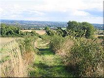 TQ6662 : North Downs Way below Holly Hill by Pip Rolls