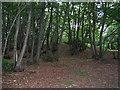 SU9318 : Coppice woodland by E Gammie