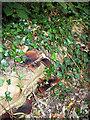 TQ2491 : Fungi and Ivy by Martin Addison