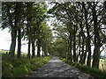 NS9938 : Tree-lined Road to Cormiston by Chris Upson