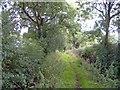 SJ4447 : Cuddington-by-Malpas, the Bishop Bennet Way by Mike Harris