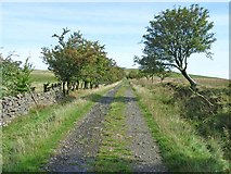 NY5675 : The track up to Bullcleugh Gate by Oliver Dixon