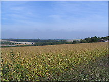 SU5707 : Maize field and view by Andy W