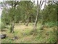 NS9793 : Piperpool Plantation by Richard Webb