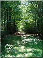 TQ0920 : Woodshill Copse by Simon Carey