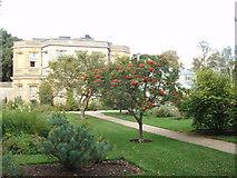 SP5206 : Botanic Gardens, Oxford by David Hawgood