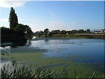 SX9291 : Trew's Weir from upstream by Derek Harper
