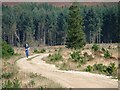 NZ8900 : Forest Track, Newton House Plantation by Mick Garratt