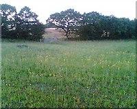 SJ6298 : Wild flower meadow by Pam Nash