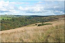 SS8429 : West Anstey: Anstey Rhiney Moor by Martin Bodman